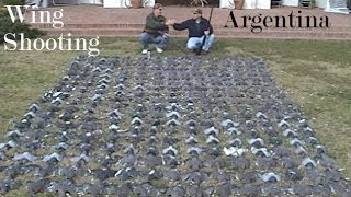Argentina wing shooting Dove & Pigeon hunt we shot these in 1 hour see how we set up & wingshoot