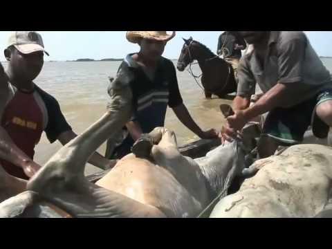TRASHUMANCIA Travesía nómada