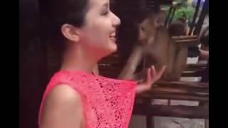 Xxx Monkey fun