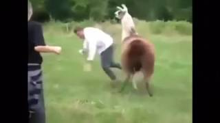 Funny animals attack Human - Dog attack girl - Dog playing with women