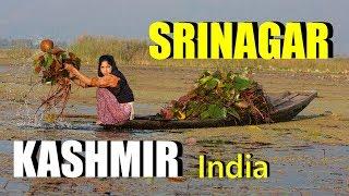Srinagar, Kashmir, India