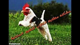 حل مشكله مطارده الكلاب للطيور فى المنزل مع كابتن ابونور 01003035709