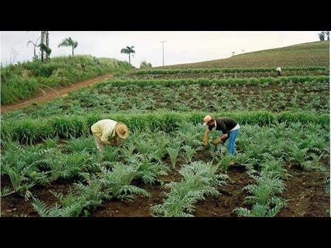 Curso Produção Comercial de Plantas Medicinais Colheita Cursos CPT