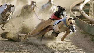 Must watch||Most horrible fight between two dogs|| Narrow escape from death