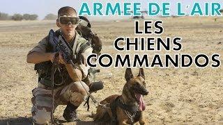 REPORTAGE - ARMEE DE L'AIR : LES CHIENS COMMANDOS