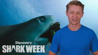2019's Biggest Breakthroughs | Shark Week's The Daily Bite