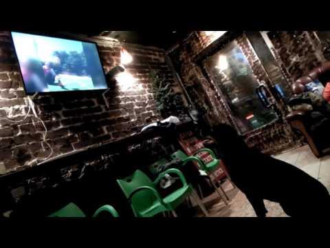 Xxx Mp4 Rottweiler Dog Watches TV Football Funny XXX 3gp Sex