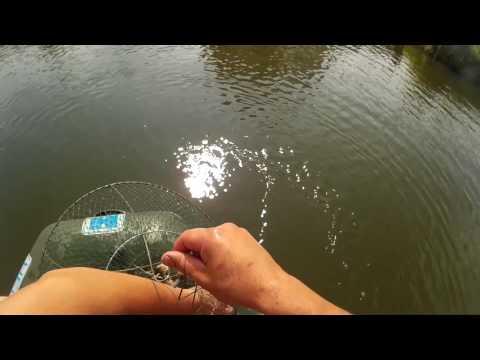 ловля раков в ручье
