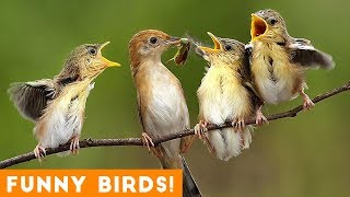 Funny Parrot & Bird Videos Weekly Compilation May 2018 | Funny Pet Videos