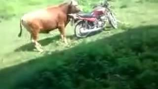 Whatss apps Funny Videoo India mostt funniest vides