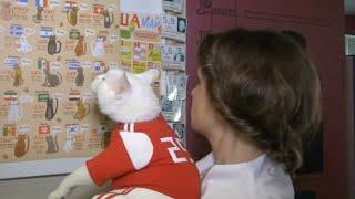 """القط """"أخيل"""" يتوقع نتائج كأس العالم في روسيا"""