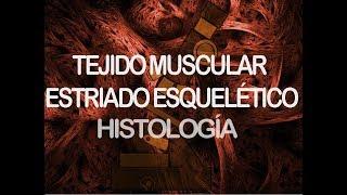 Músculo Estriado Esquelético | Histología