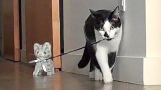 Cat Walking Kitten!