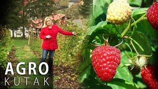 Agro Kutak 55 - Uzgoj malina za početnike - 15.11.2016.
