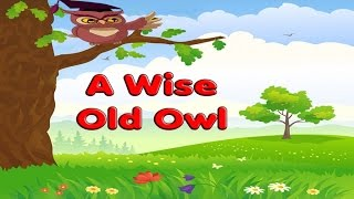 A WISE OLD OWL - Nursery Rhymes Songs for babies