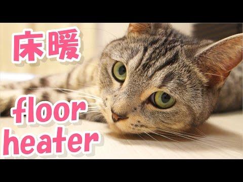 猫が初めての床暖を満喫している【猫 かわいい】 - the cute cats love the floor heater -
