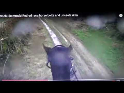 Xxx Mp4 When A Horse Runs Off With A Rider It Is NOT The Horse S Fault 3gp Sex