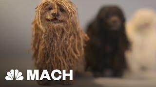 Soshee Is World's First Social Media Robot Dog | Mach | NBC News