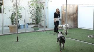 How to Deal With Off-Leash Dogs & Their Owners : Raising Your Dog