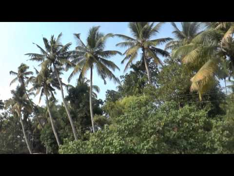 backwaters of Kerala  xxx  A Journey Encompassing Tranquillity, Romance and Adventure