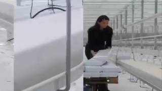 How to make a commercial greenhouse ..,........