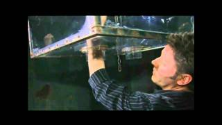 Saw 2 - The Hand Trap - BackStage - HD Video