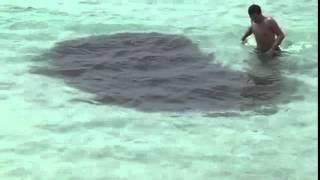 Homem avista uma mancha escura no mar e coloca a mão sem sber o que era
