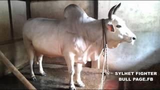 DEVDAS Sylheti Bisal (2015) Gulapgonj
