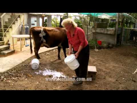 How Not to Milk a Cow
