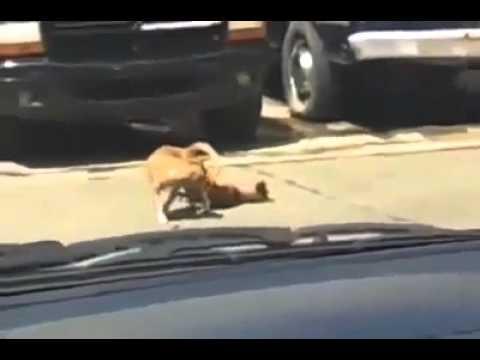 Japanese street dogs fuckin fail