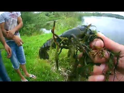 ловля раков по-под водой