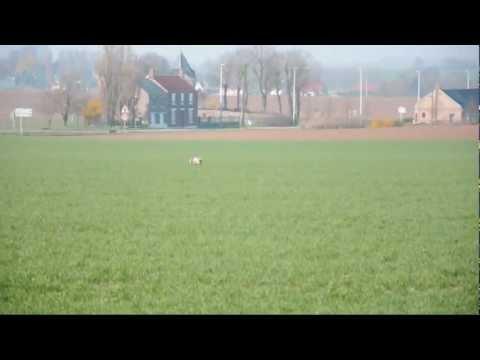 Braque Français spring field trial 2011