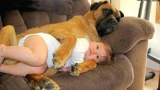 Big Dog and Baby Compilation