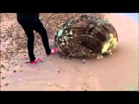 Extraño objeto encontrado en una playa de Japón