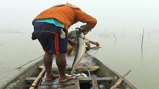 fisherman's life   lot of fish catching
