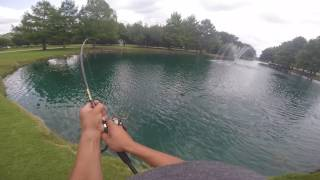 """""""MUST WATCH"""" Monster Fish Caught in small pond"""