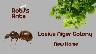 New Home For My Lasius Niger Colony