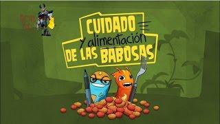 Bajoterra: cuidado y alimentación de las babosas en español - movie times