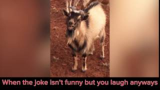 The Goat, He Laughs Like A Man!