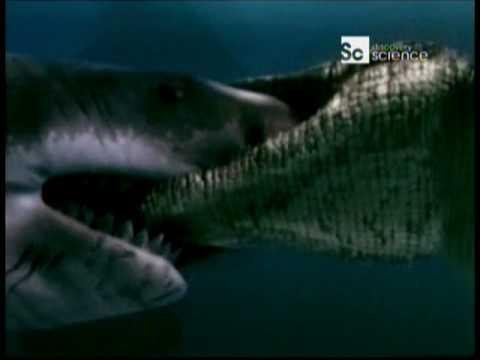 Duelo Animal Cocodrilo marino vs Gran tiburón blanco Audio Latino HQ