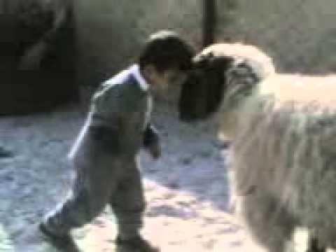 funny child & Animal.3gp
