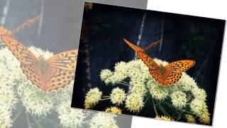 [Relaxing music] Flower Worship