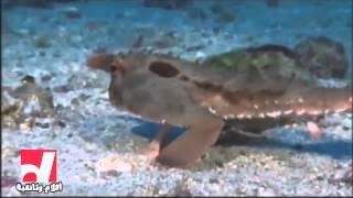 أغرب أنواع الأسماك السمكة الخفاش - أفلام وثائقية