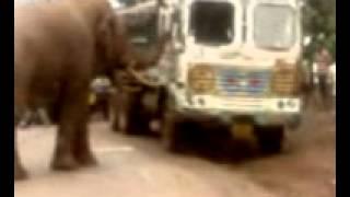 elephant joda