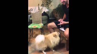 TWERK'ing dog