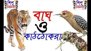 Bag O Khatthokrar Golpo.বাঘ ও  কাঠঠোকরা গল্প