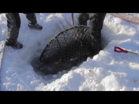 Nome King Crabbing on Bering Sea Ice