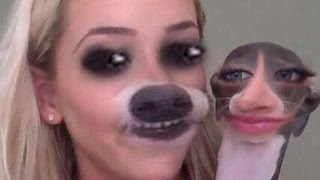PET FACE-SWAPS? // YOUTUBER EDITION!