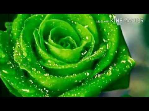 Xxx Mp4 Sexy Song Hindi Song Sexy Hot Songmusic DJ Dunce X Song Videos 3gp Sex