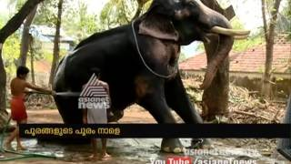 Elephants are getting ready for Thrissur Pooram 2017